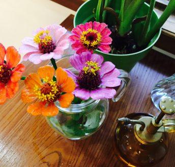 新しいお花